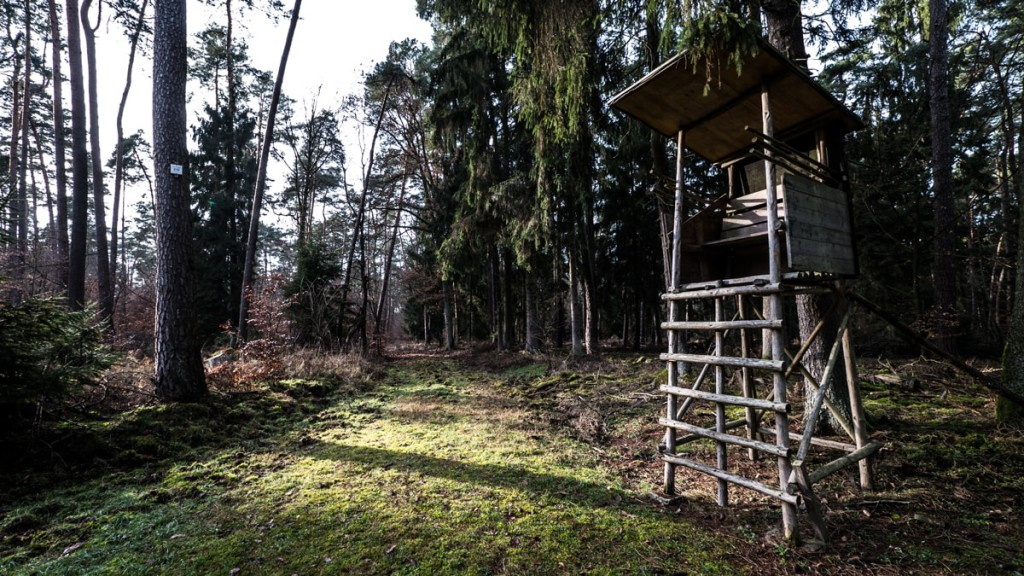Creative Walks: Stadtwald Rodgau